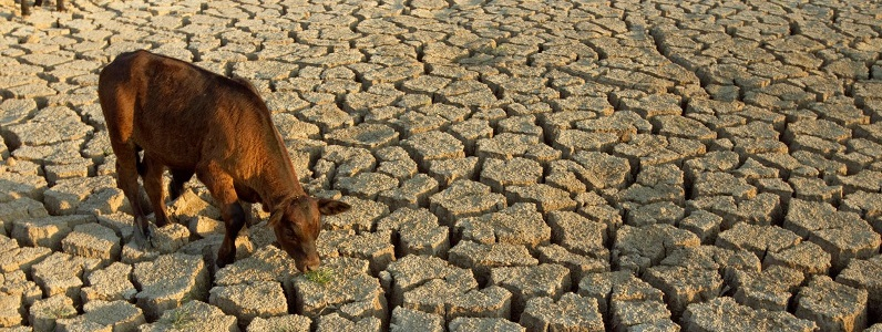 New concessional loan fund for farmers experiencing drought